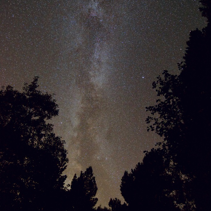 Milky way Trees