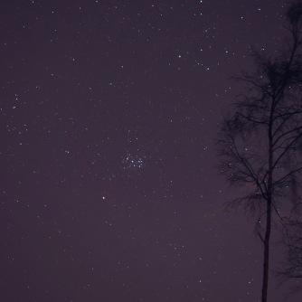 The Pleiades - Craig Phadrig woods