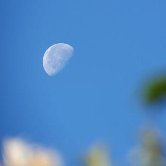 Daylight waning gibbous Moon